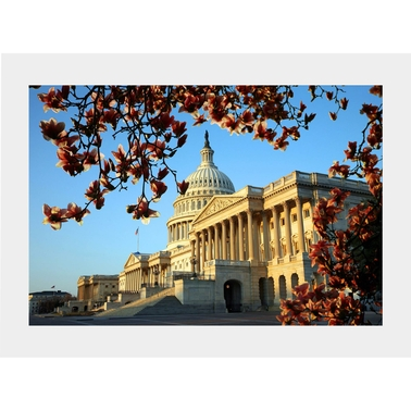 Capital Art US Capital NE Corner Front on Sunny Day with Magnolia Flowers Matte