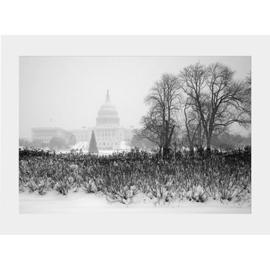 Capital Art US Capital Snowy Winter Daytime Holiday View with Christmas Tree Matte