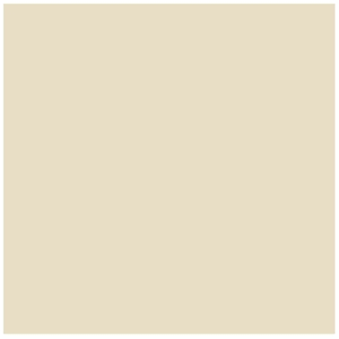 Springs Creative Natural Charm Wide Solid White Fabric by the Yard
