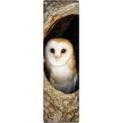 IF National Geographic Barn Owl 3-D Bookmark