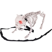 Sunstar Barking Dog Skeleton