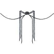 Sunstar Spider Black Long Legs