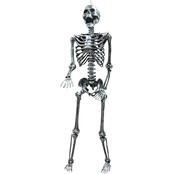 Skeleton Steel Gray Lightup 5 ft.