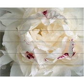 Trademark Fine Art Kurt Shaffer 'Perfect Peony' Wood Slat Art