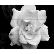 Trademark Fine Art Kurt Shaffer Gardenia in Black and White Wood Slat Art