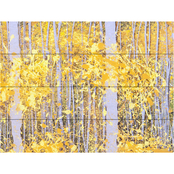 Trademark Fine Art Roderick Stevens 'Panor Aspens Grey Forest' Wood Slat Art