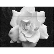 Trademark Fine Art Kurt Shaffer 'Gardenia in Black and White' Wood Slat Art