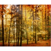 Trademark Fine Art Philippe Sainte Laudy 'Brilliant Fall Color' Wood Slat Art