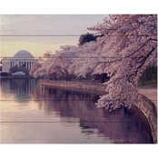 Trademark Fine Art Gregory O'Hanlon 'Cherry Blossoms Jefferson Memorial' Slat Art