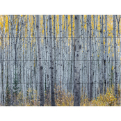 Trademark Fine Art Pierre Leclerc 'Forest of Aspen Trees' Wood Slat Art