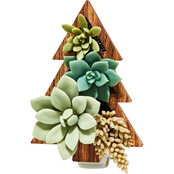 Bath & Body Works Succulent Tree Wallflower Fragrance Plug