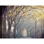 Inkstry Avenue of Trees Giclee Gallery Wrap Canvas Print