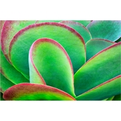 Inkstry Succulent V Canvas Print