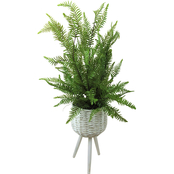 LCG Florals 46 in. Sword Fern in White Basket Stand