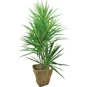 LCG Florals Dracaena Tree with Basket