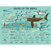 GreenBox Art Sharks of the World Canvas Wall Art 24 x 18