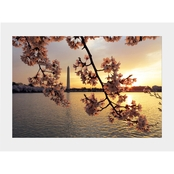 Capital Art Cherry Blossoms at Sunrise with the Washington Monument Matte