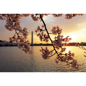 Capital Art Cherry Blossoms at Sunrise with the Washington Monument Canvas