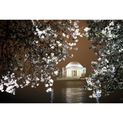 Capital Art Cherry Blossoms at Tidal Basin with Jefferson Memorial at Night Canvas