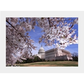 Capital Art US Capital SW Corner View on a Sunny Day with Cherry Blossoms Matte