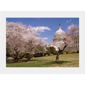 Capital Art US Capital SE Corner on Sunny Day with Blooming Cherry Trees Matte