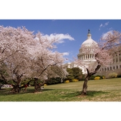 Capital Art US Capital SE Corner on Sunny Day with Blooming Cherry Trees Canvas