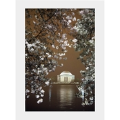 Capital Art Cherry Blossoms Blooming with the Jefferson Memorial at Night Matte