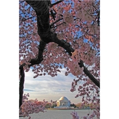 Capital Art Cherry Blossoms Blooming at Jefferson Memorial on Bright Morning Canvas