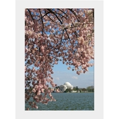 Capital Art Cherry Blossoms Blooming at Jefferson Memorial on a Breezy Day Matte