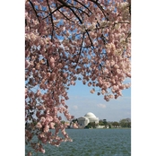 Capital Art Cherry Blossoms Blooming at Jefferson Memorial on a Breezy Day Canvas