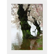 Capital Art Cherry Blossoms Blooming with a Bench During a Raining Day Flood Matte