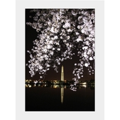 Capital Art Cherry Blossoms Blooming with Washington Monument and Scaffold Matte