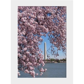 Capital Art Cherry Blossom Blooms Framing Washington Monument on Sunny Day Matte
