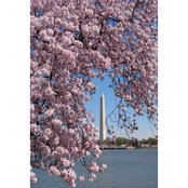 Capital Art Cherry Blossom Blooms Framing Washington Monument on Sunny Day Canvas