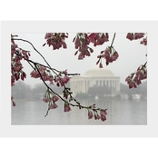 Capital Art Cherry Blossoms with Jefferson Monument on a Rainy Day Matte