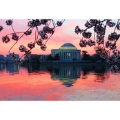 Capital Art Cherry Blossoms Blooming with Jefferson Monument at Sunset Canvas