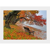 Capital Art Cherry Blossoms Trees and Bench on a Rainy Fall Day Matte