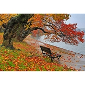 Capital Art Cherry Blossoms Trees and Bench on a Rainy Fall Day Canvas