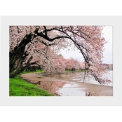 Capital Art Cherry Blossoms by the Tidal Basin after a Daytime Rain Matte