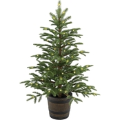 National Tree Company 4 ft. Norwegian Spruce Entrance Tree with Clear Lights