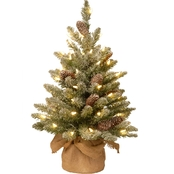 National Tree Co. 2 Ft. Snowy Concolor Fir Tree with Battery Operated LED Lights