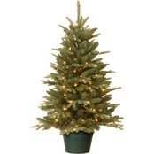 National Tree Co. 3 Ft. Everyday Collection Evergreen Tree with Clear Lights