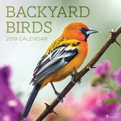 TF Publishing Backyard Birds Wall Calendar