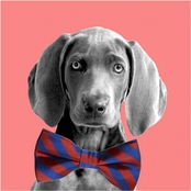 PTM Images Weimaraner With Bowtie Decorative Plaque Wall Art