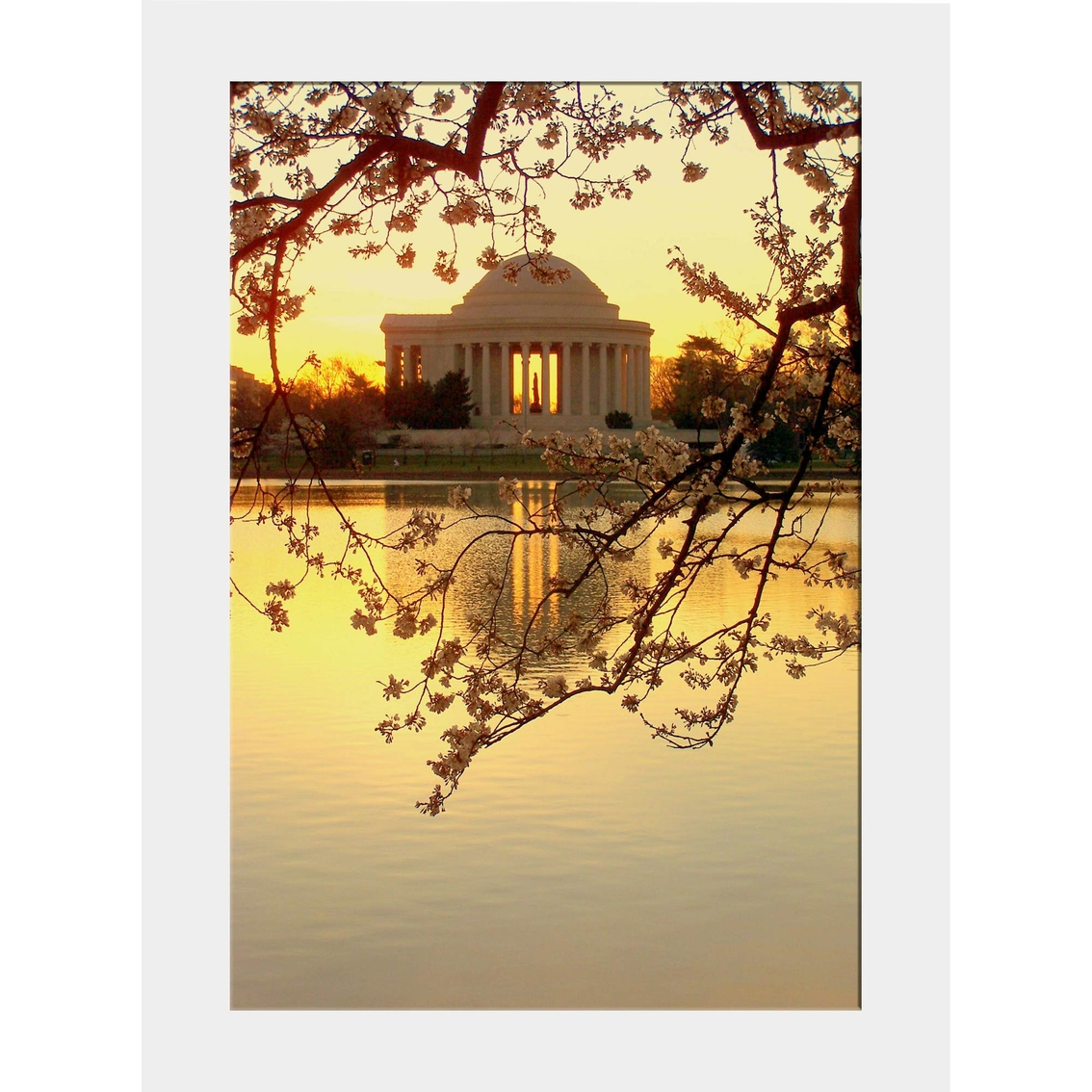 Capital Art Cherry Blossoms Blooming With The Jefferson Memorial ...