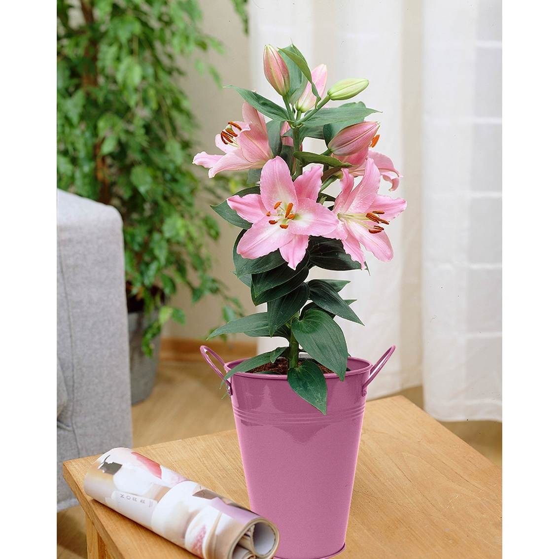 Van Zyverden Patio Lily Souvenir With Pink Metal Planter And Growers on